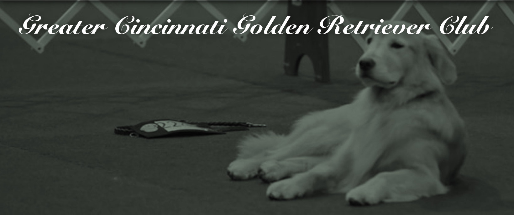 Greater Cincinnati Golden Retriever Club
